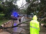 satu-pohon-tumbang.jpg
