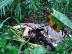 seekor-buaya-yang-muncul-di-sungai-kwagon_20171129_182957.jpg