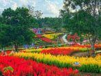 taman-bunga-agropolitan-simpang-nibung.jpg