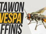 tawon-vespa-affinis.jpg