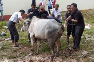 Tebar Qurban ke Pulau kerjasama BAZ dan Tribun Batam - baz_tribun0791_(2).JPG