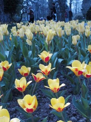 Menikmati Mekarnya Tulip di Swiss - IMG_2530.jpg