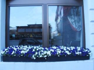 Menikmati Mekarnya Tulip di Swiss - IMG_2550.jpg