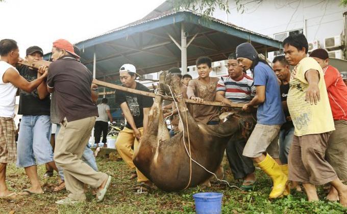 Terima Kasih Pembaca Tribun Batam - Idhul_Adha_1434_H_Tribun_Batam_01.jpg