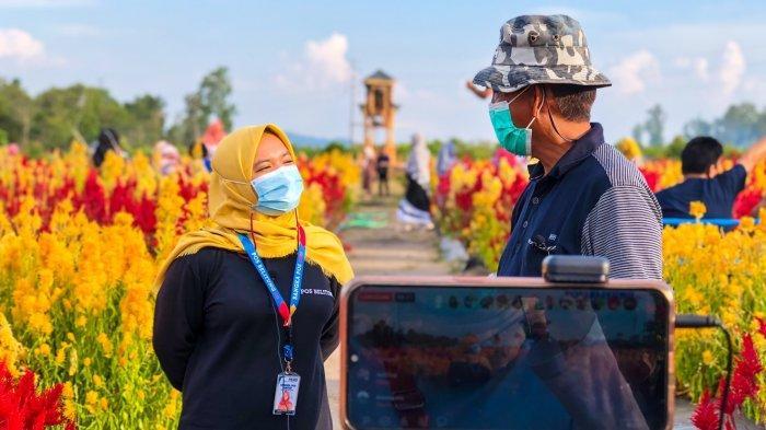 Naluri Bertani, Ardawan Tanam Bunga Celosia yang Kini Ramai Dikunjungi Warga Belitung