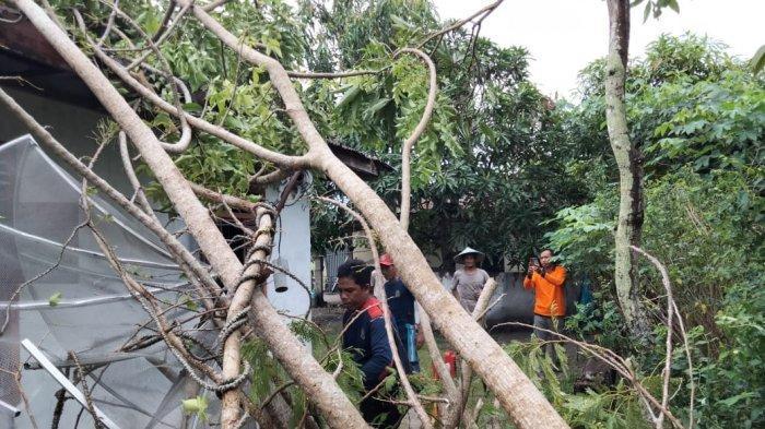 Dua Rumah di Manggar Tertimpa Pohon Tumbang Karena Angin Kencang, Satunya Rumah Pribadi Camat