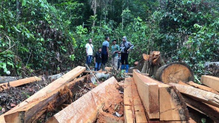 Kasus Illegal Logging di Gantung, Satreskrim Polres Belitung Timur Amankan Terduga Pelaku