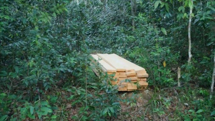 Illegal Logging Dekat Geosite Open Pit Nam Salu Kelapa Kampit, Polisi Masih Lakukan Pemeriksaan