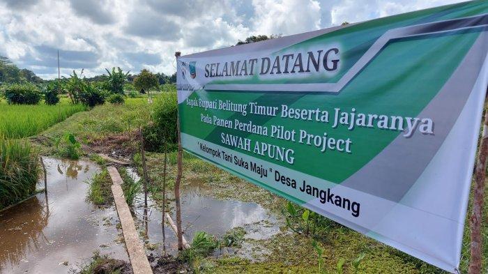 Kisah Sukses Petani di Desa Jangkang Olah Lahan Kritis Jadi Sawah Apung,5 Rakit Hasilkan 250 Kg Padi - 20210611-sawah-apung3.jpg