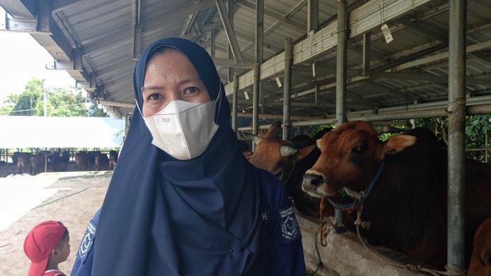 Persiapan Idul Adha, DKPP Belitung Beri Label Hewan Kurban Sehat