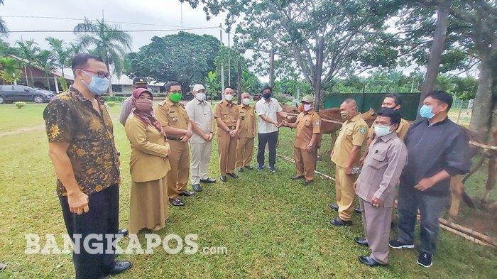 Kepala Desa Padang Merasa Terbantu dengan Bantuan Kurban Sapi PT SWP