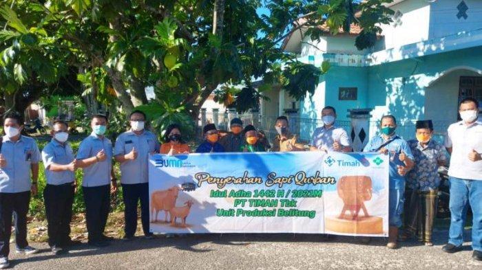 Iduladha 1442 H, Belitung Timur Dapat 19 Sapi dari PT Timah Tbk, Belitung Tujuh