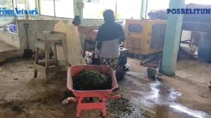 Gunakan Peralatan Seadanya Produksi Kompos Hingga Produksi 100 Kg Perhari
