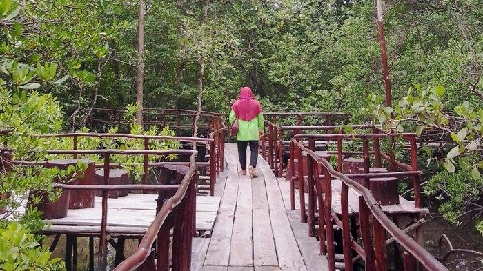 Jaga Tanaman Bakau dari Kerusakan Penambangan, Komunitas Akar Bakau Bikin Taman Mangrove Swadaya