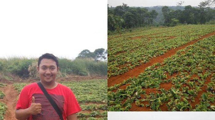 Pria Ini Lulusan Sarjana Teknik Lalu Banting Setir Jadi Petani, Kini Kaya Raya