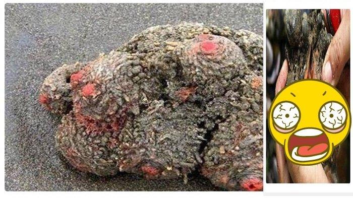 Dikira Batu Misterius, Setelah DIbelah Isinya Sangat Mengejutkan (VIDEO)