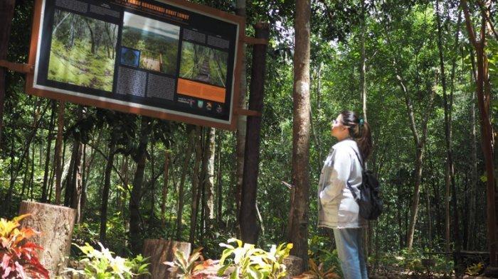 Wisata Gunung Lumut Belitung Timur, Masing-masing Ketinggian Punya Jenis Lumut yang Berbeda