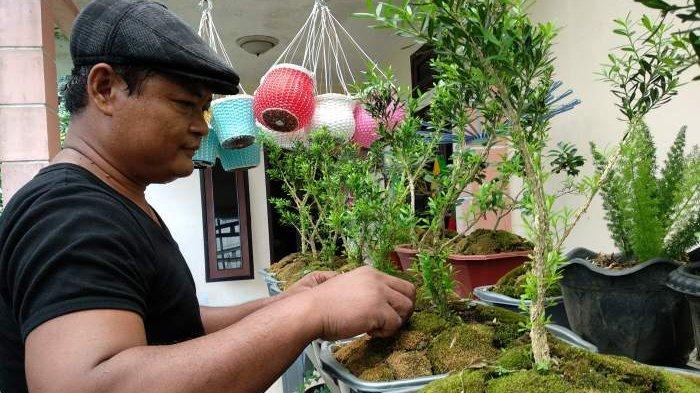 Pohon Berbuah Pun Dijadikan Bonsai, Tanaman Lokal Diminati