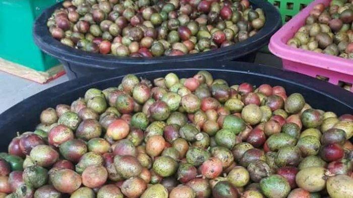 Buah Matoa Khas Papua Diburu Warga Beltim, Penjual Kewalahan - buah-matoa_20170922_180747.jpg