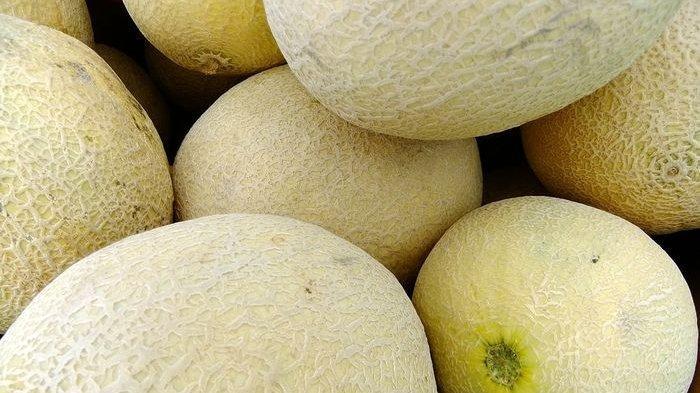 Cukup Lihat Bagian Ini Saja untuk Mengetahui Ciri-ciri Melon yang Manis, Berair dan Pas Matangnya