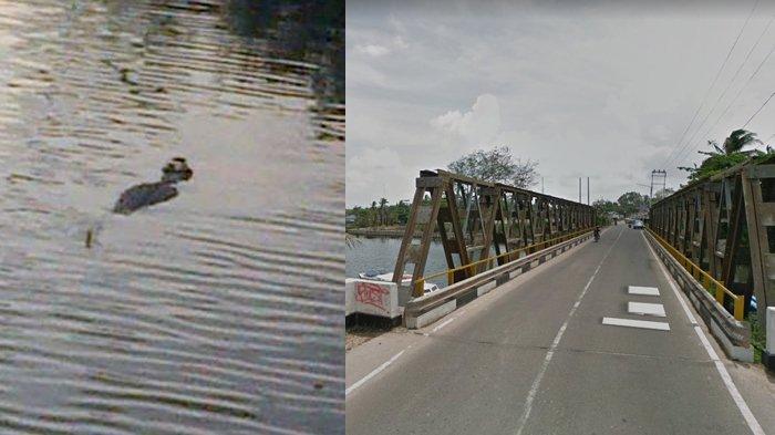 Heboh Buaya Sungai Lenggang Muncul ke Permukaan Sampai Bikin Jalan Macet, Ini Fotonya