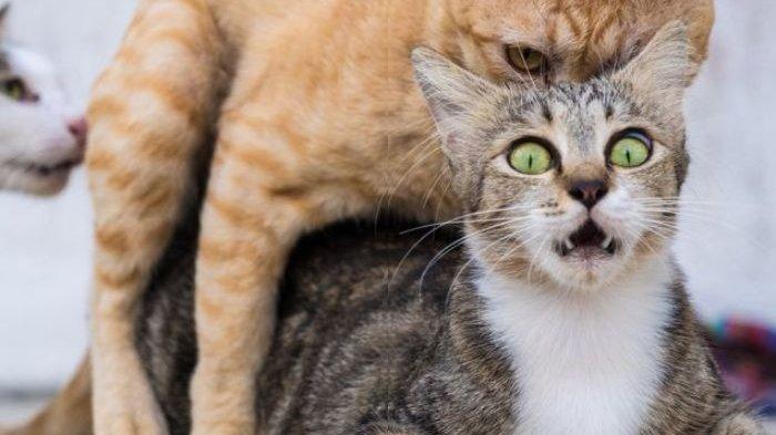 Jangan Disepelekan, Bulu Kucing Bukan Cuma Sebabkan Toksoplasma, Dua Penyakit Kulit Ini Bisa Nempel!