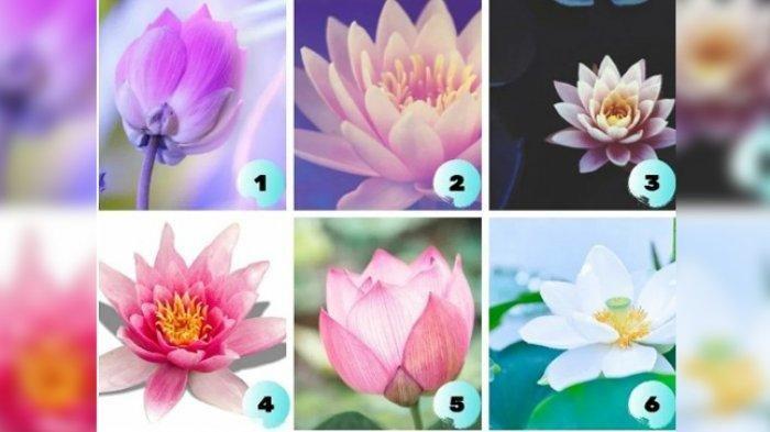 Yuk ikutan Tes Kepribadian, Pilih Satu Bunga Lotus Ini & Lihat Situasi yang Sedang Kamu Hadapi kini