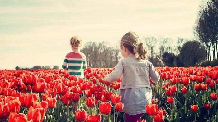 Jadi Satu di Antara Bunga Cantik dan Populer di Dunia, Ini Makna Bunga Tulip Berdasarkan Warnanya