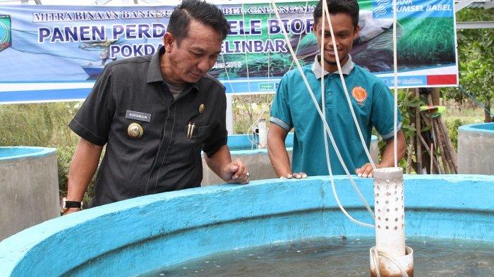 Pembudidaya Ikan Lele Waspadai Jamur dan Aeromonas di Musim Hujan