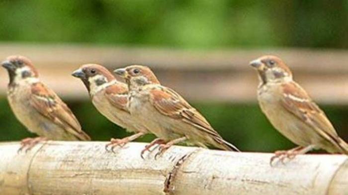 Impian Gagal Harta Bisa Ludes, Ini Arti Mimpi Tentang Burung yang Kerap Dialami