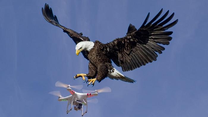 Arti Mimpi Menangkap Burung, Keberuntungan Sudah di Depan Mata, Tapi Tergantung Jenisnya