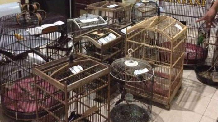 Lakukan Pencurian di 5 TKP, Pemuda Ini Berhasil Kumpulkan Belasan Burung Kicauan