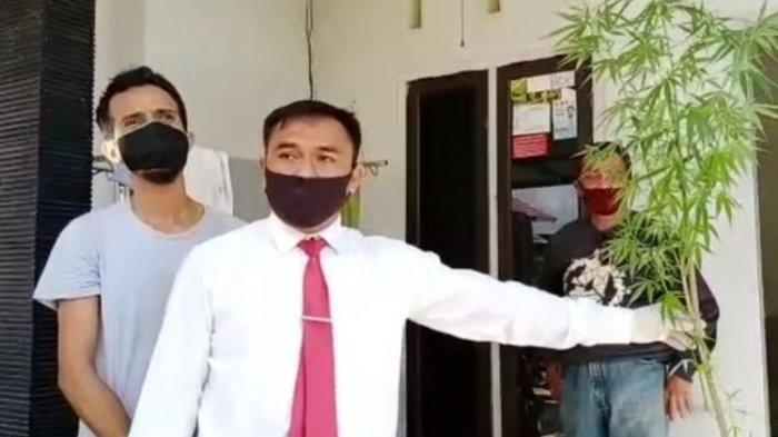 Pria Mantan Caleg Ini Budidayakan Ganja di Pekarangan Rumah, Saat Diciduk Polisi Ngaku Cuma Hobi