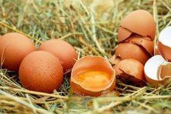 Berakhir di Tempat Sampah, Faktanya Cangkang Telur Obat Rumahan Anti Penuaan Wajah, Boleh Dicoba!