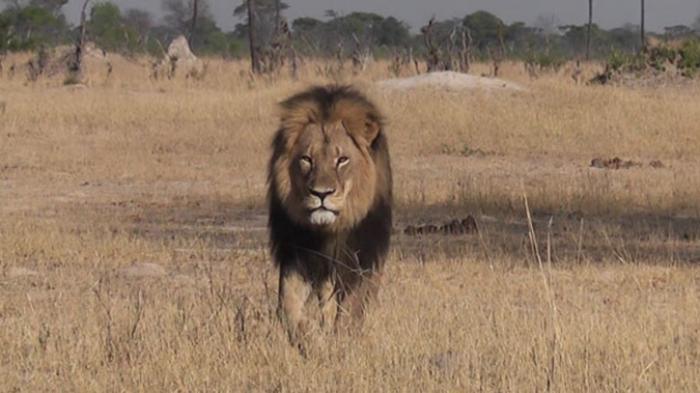 Berhasil Membunuh Singa Si Raja Hutan, Rencana Besar Menjatuhkan Pria Ini Gagal Berkat Mimpi Ini