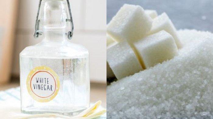 Cuma Semprotkan Larutan Gula dan Cuka ke Tanaman, Efeknya Luar Biasa!