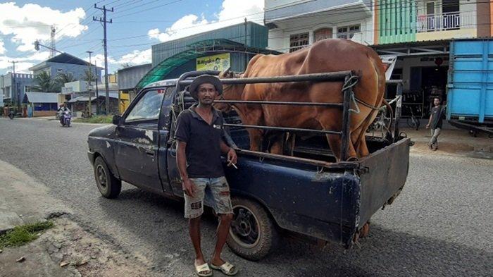 HET Daging Sapi Tunggu Kabar Pemprov Bangka Belitung