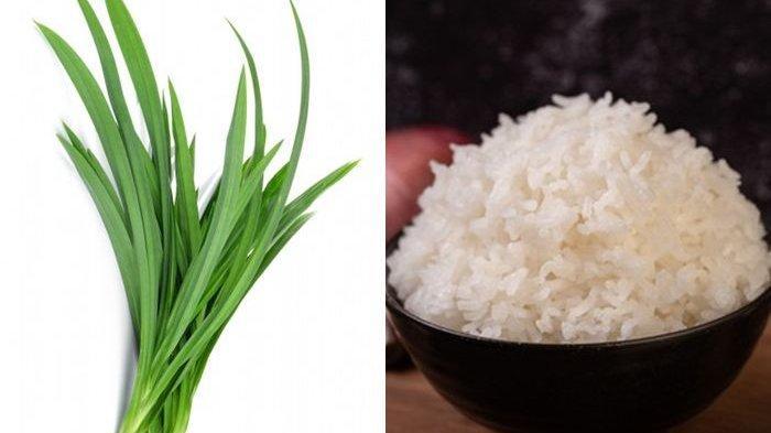 Cobain Mulai Sekarang! Menambahkan Daun Pandan Saat Masak Nasi Bisa Cegah Penyakit Mematikan Ini