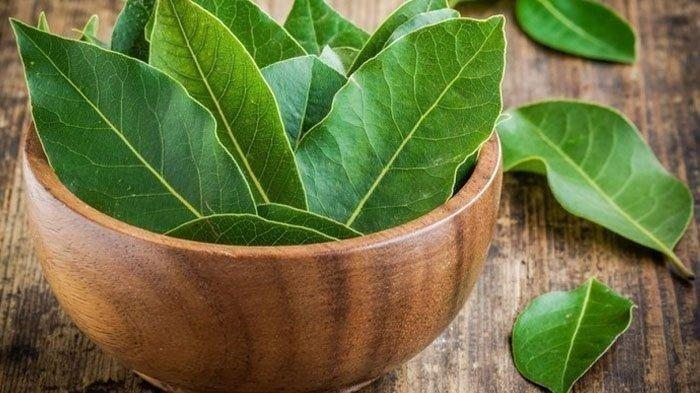 Manfaat Daun Salam dalam Masakan, Daun Herbal yang Memperkaya Rasa dan Aroma