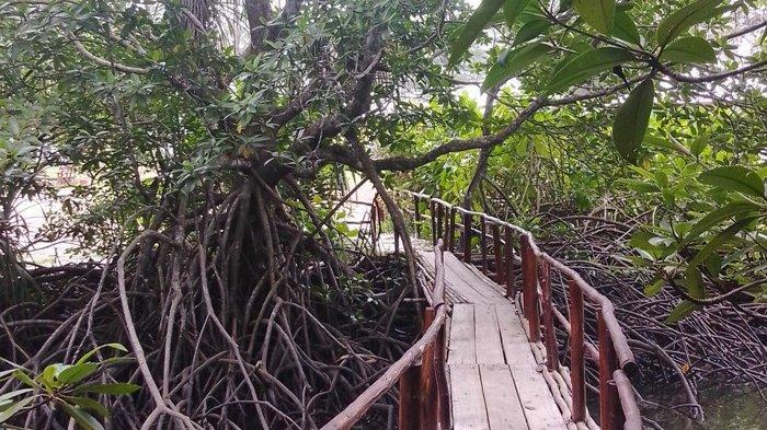 Pengunjung saat melewati jalur kayu di kawasan Taman Mangrove Komunitas Akar Bakau, Desa Sukamandi, Kecamatan Damar, Minggu (13/12/2020).
