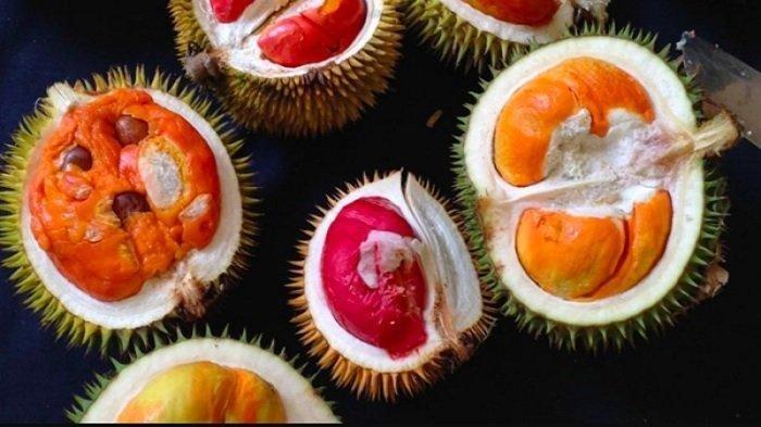 Kolektor Durian Malaysia Ini Berkelana Hingga Negeri Tetangga Untuk Cari 80 Jenis Pohon Durian