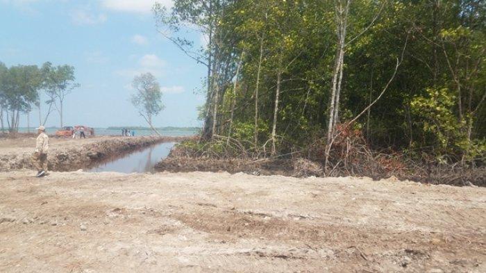 Pengrusak Mangrove Diberikan Waktu 60 Hari untuk Pulihkan Lahan