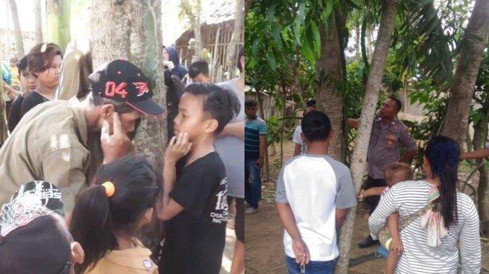 Fenomena Aneh, Pohon Menangis di Jember, Kuping Ditempel Terdengar Isak Tangis Perempuan