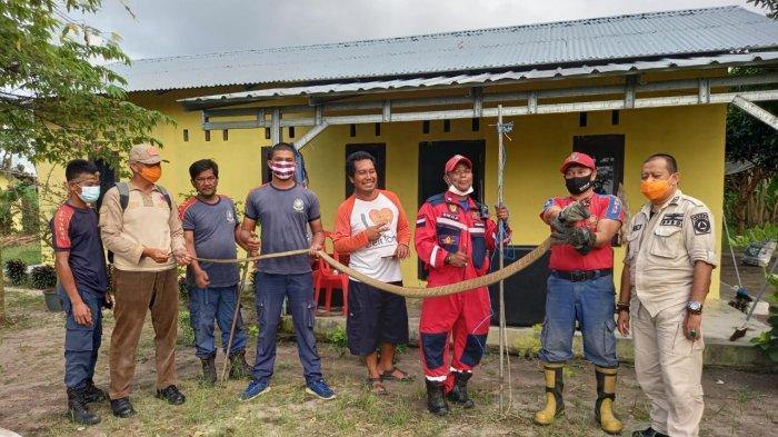Petugas Damkar BPBD Belitung Evakuasi King Kobra Tiga Meter dari Rumah Warga