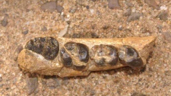 Penemuan Fosil Monyet Berusia 22 Juta Tahun di Kenya, Seperti Ini Bentuknya