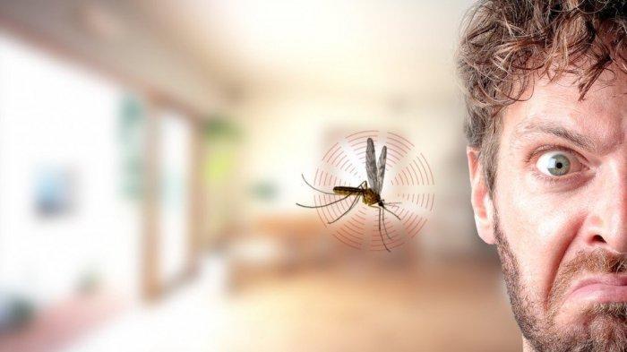 Nggak Perlu Pakai Obat Berbahan Kimia Lagi, 7 Tanaman Ini Bisa Usir Nyamuk Secara Alami
