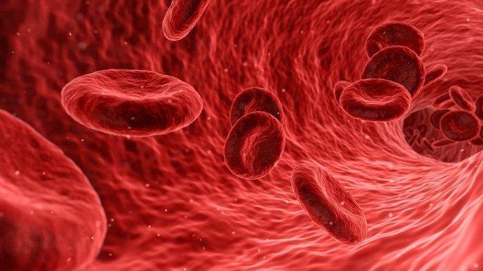 Ilustrasi sel darah.