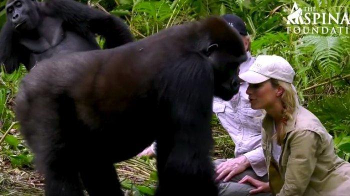 Pria Ini Rawat Gorilla Sejak Kecil dan Lepas ke Hutan, Hal Ini Terjadi Saat Bertemu 4 Tahun Kemudian