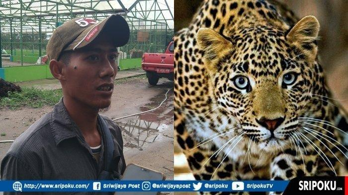 HEBOH, Mahasiswa dan Petani Karet Tunggang-Langgang Lihat Binatang Diduga Harimau Masuk Area Kampus