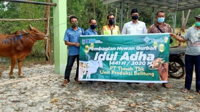 PT Timah Tbk Salurkan 28 Ekor Sapi ke Wilayah Kerjanya di Pulau Belitung
